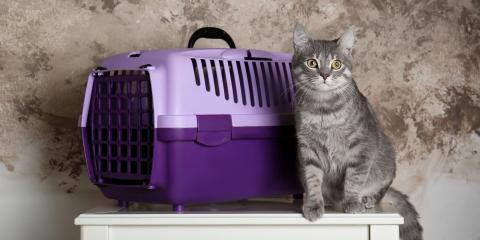 How to Get Reluctant Cats Into Their Carriers, Orange Beach, Alabama