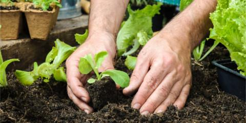 Improve Your Garden Soil With These 4 Lawn Maintenance Tips, Orange Beach, Alabama