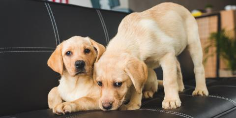 5 Ways to Effectively Puppy-Proof Your Home, Orange Beach, Alabama
