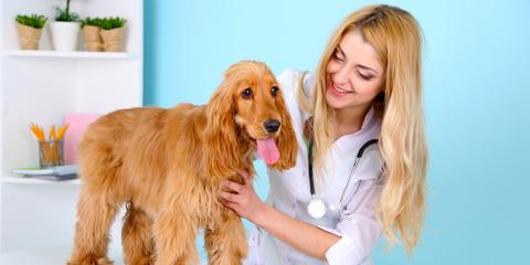 What You Should Know to Prepare Your Puppy for Vaccines, Orange Beach, Alabama