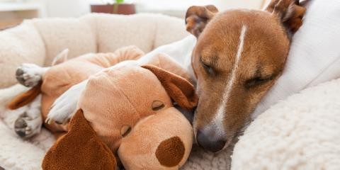 How Can You Determine When Your Dog Is Sick?, Orange Beach, Alabama