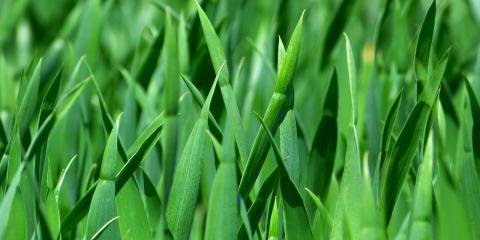 3 Healthy Benefits of Choosing Organic Lawn Fertilizer, League City, Texas