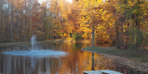 4 Tips for a Fish-Friendly Backyard Pond, Sunman, Indiana