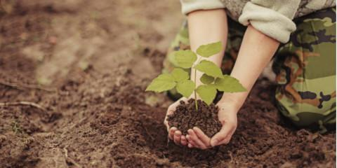 5 Trees You Should Never Plant in Your Yard, ,
