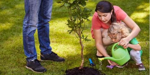 Watering Basics for Beautiful Tree and Shrub Care, Owings Mills, Maryland