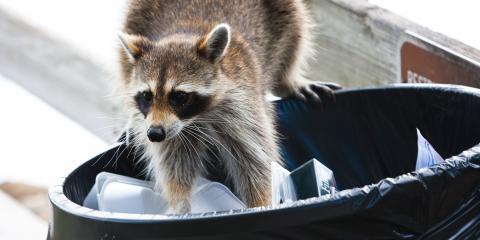 4 Tips to Keep Pests Out of Dumpsters & Trash Bins, Ozark, Alabama