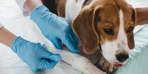 A Brief Guide to Vaccinating Your Dog, ,