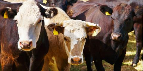 Why Farm Insurance Experts Recommend Insuring Your Livestock, Licking, Missouri