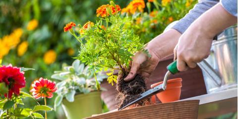 5 Essential Garden Supplies Everyone Needs, Anchorage, Alaska