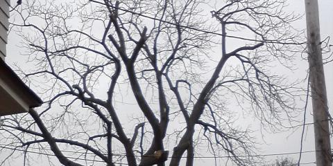 How Much Snow can a Tree Handle? New York's Best Tree Removal Company Explains, Brockport, New York