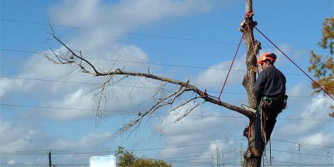 3 Reasons to Hire a Certified Arborist, College Station, Texas