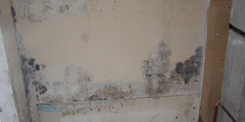Tips For Identifying Mold In Your Home From Hawaii 039 S Remediation Experts