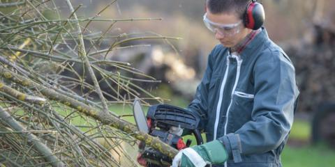 What to Expect From Your Tree Service Company, Milton, Pennsylvania