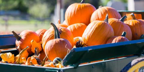4 Pagosa Springs Fall Festivals To Check Out During Your Fireside Cabins Stay, Pagosa Springs, Colorado