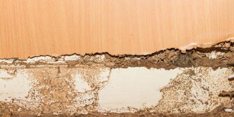 Learn How Long it Takes Drywood & Subterranean Termites to Destroy a House, Pahoa-Kalapana, Hawaii