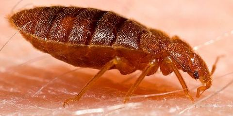 5 Steps To Prepare For Bed Bug Treatment From Pahoa S Pest Control