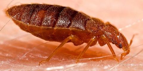 5 Steps to Prepare for Bed Bug Treatment From Pahoa's Pest Control Experts, Pahoa-Kalapana, Hawaii