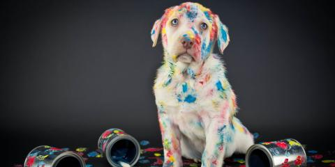 "It's a ""Paint Your Pet"" Paint Party at Artherapy Studios!, ,"