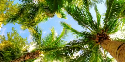 4 Tips to Help You Grow Palm Trees from Seed, Kihei, Hawaii