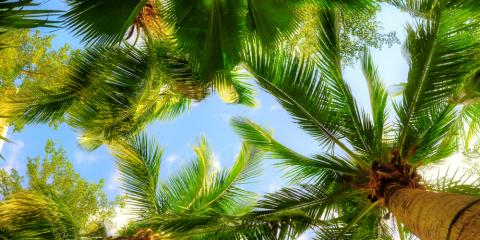 3 Simple Tips for Landscaping With Palm Trees, Kihei, Hawaii