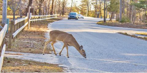 3 Safety Tips for Driving During Deer Season , East Rochester, New York