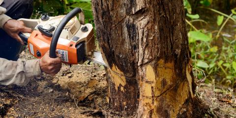 3 Signs You Need to Schedule Tree Removal, Fairview, Nebraska