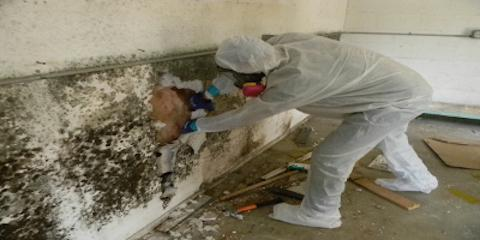 When do You Need Professional Mold Removal? Greater Cincinnati's Remediation Experts Explain , Covington, Kentucky