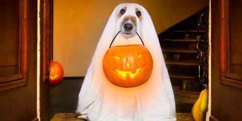 Do's & Don'ts of Pet Halloween Costumes, Clarksville, Arkansas