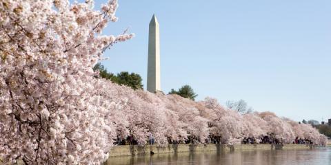 National Cherry Blossom Festival 2016 – Save On Parking!, Jersey City, New Jersey