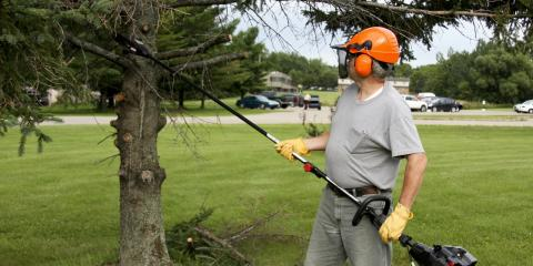3 Reasons to Hire a Professional Garden Service for Your Trees, Altadena, California