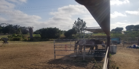 Pasture Boarding | Is Your Horse Suited for Pasture Board?, Oceanside-Escondido, California