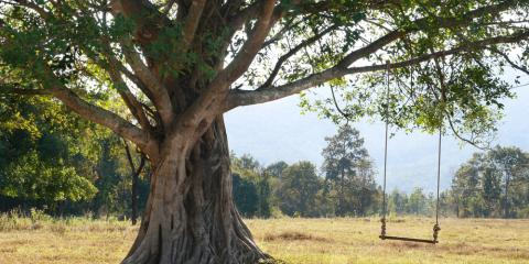 Tree Service Shares 3 Steps to Take If Your Tree Is Dying, Milton, Pennsylvania