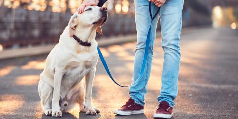 3 Pet Safety Tips for Walking on Asphalt in the Heat, Richmond, Kentucky
