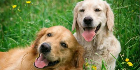 3 Items Your Pup Will Need During Pet Boarding, Richfield, Ohio