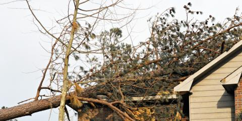 Roof Maintenance 101: What Is the Danger to My Property From Tree Branches? , Ewa, Hawaii