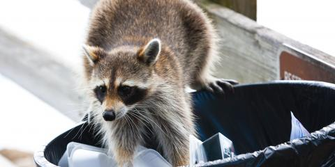 3 Tips for Keeping Animals Out of the Trash, Pekin, Illinois