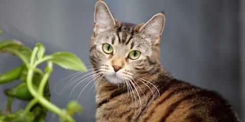 3 Cat Dental Care Needs, Penfield, New York