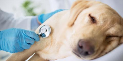 Advice From a Veterinarian: 5 Plants That Can Poison Your Dog, Penfield, New York