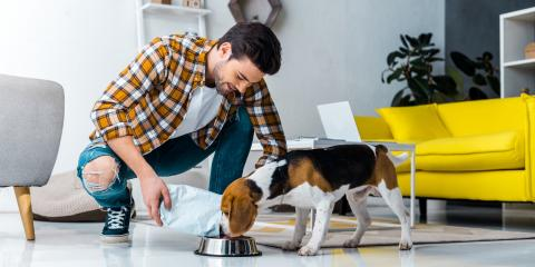 What You Need to Know About the F.D.A. Dog Food Study, Penfield, New York