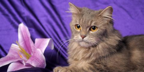 Local Veterinarians Explain How Easter Lilies Can Harm Your Cat, Penfield, New York