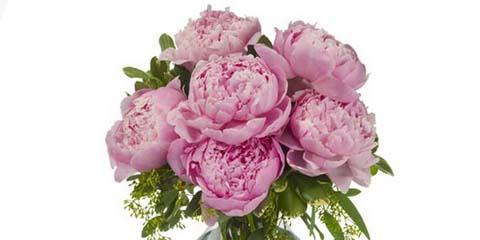 the best flower shop in nyc boasts an early delivery of pink peonies citifloral inc. Black Bedroom Furniture Sets. Home Design Ideas