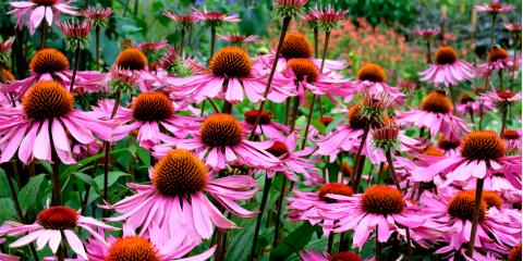 4 Common Questions About Perennials, Holland, Wisconsin