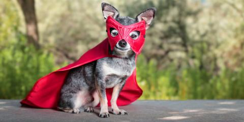 4 Important Do's & Don'ts for Pet Halloween Costumes, Perry, Georgia