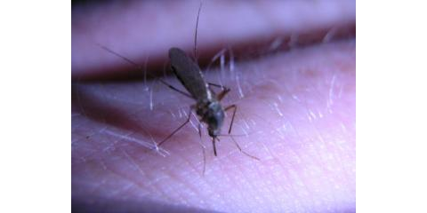 Rid Your Home of Mosquitoes With Treatment From Perry's Best Exterminator, Perry, Georgia