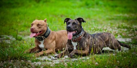 Does Homeowners Insurance Cover Dog Bites Regardless of the Breed?, St. Peters, Missouri
