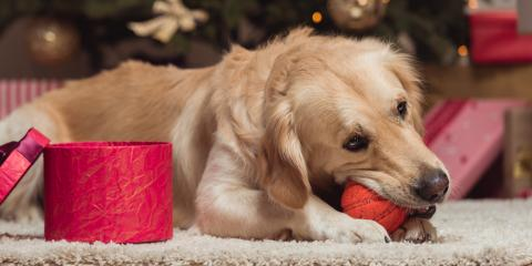 3 Tips for Keeping Your Dog Calm Around Holiday Guests, Chardon, Ohio