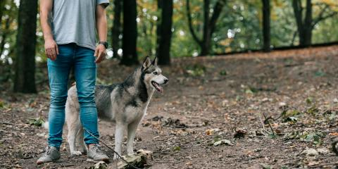 How to Seek Legal Recourse After a Dog Bite, Waterbury, Connecticut