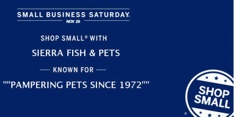 Small business saturday sale sierra fish pets renton for Sierra fish and pets