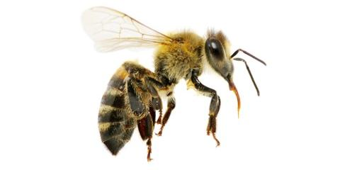 Commercial Pest Control Experts Explain Problematic Pests for Businesses, Springfield, Ohio