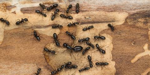 3 Common Pests You May Encounter This Spring, Garden City, Georgia
